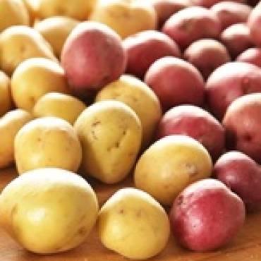 Ziemniak – samo zdrowie! – Wtorki z Gersonem