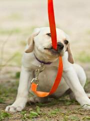 Kiedy Twój pies ciągnie do innych psów