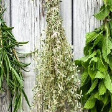 Zaklęcia i czary z ziołami