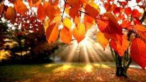liscie-park-jesien