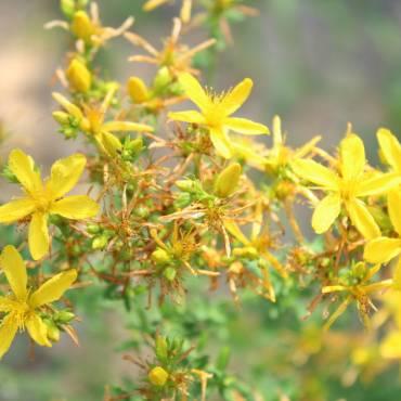 Kwiaty i zioła, które pomagają w walce ze stresem