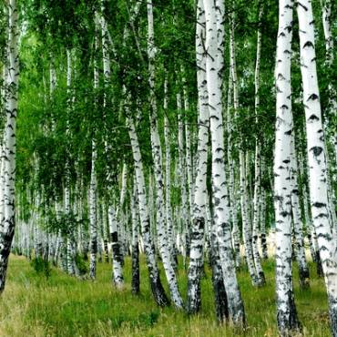 Dzikie, jadalne rośliny w Twojej okolicy