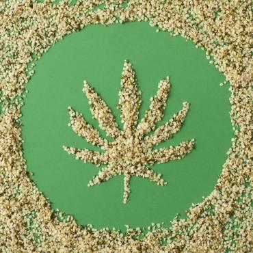 Nasiona marihuany – samo zdrowie!