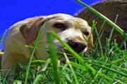 pies zjada odchody
