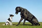 Zaklinacz psów