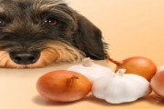 jedzenie, które szkodzi psu