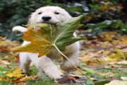 zabawy z psem jesienią