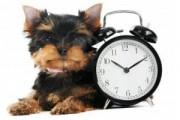 zmiana czasu pies