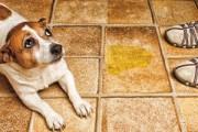 jak oduczyć psa załatwiania się w domu