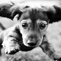 jak wychować psa