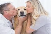 pies najlepszy przyjaciel