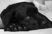 wypadki psów